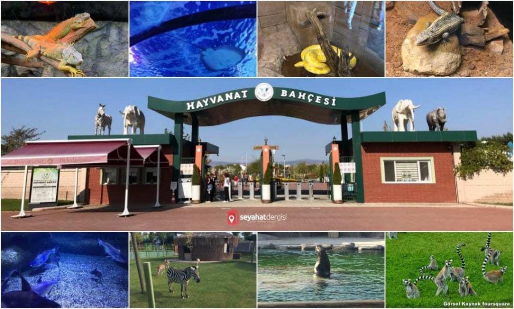 Eskişehir Hayvanat Bahçesi ve Sualtı Dünyası