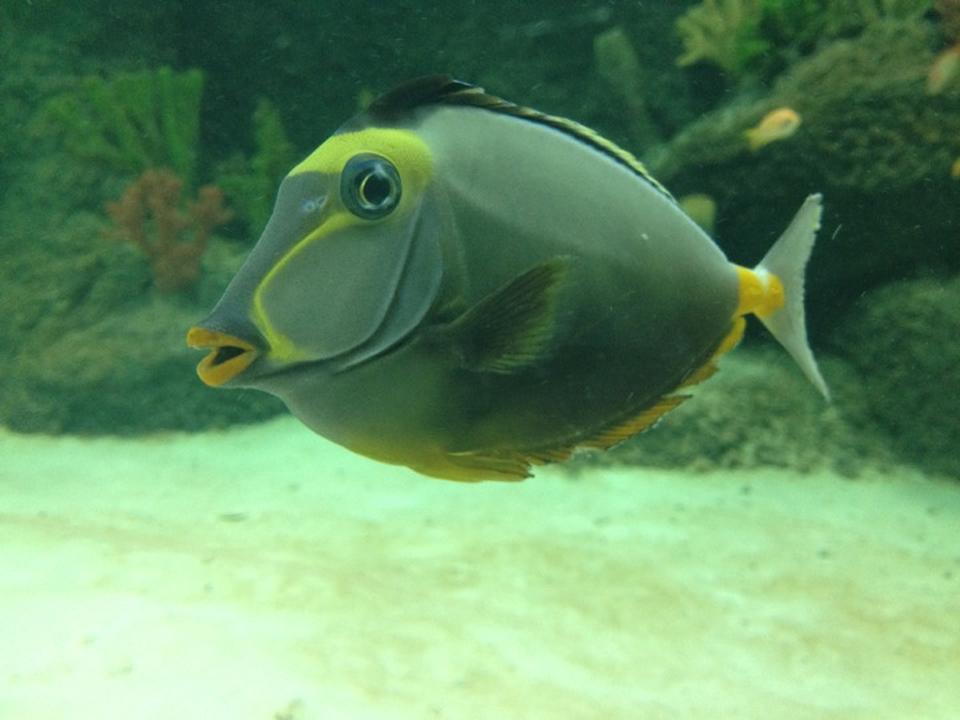 Aqua Vega Akvaryumda Yer Alan Balıklar