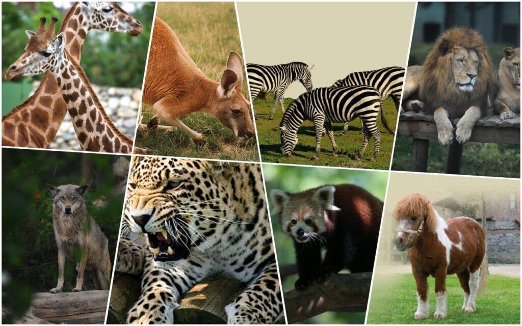 Bursa Hayvanat Bahçesi Memeli Hayvanları