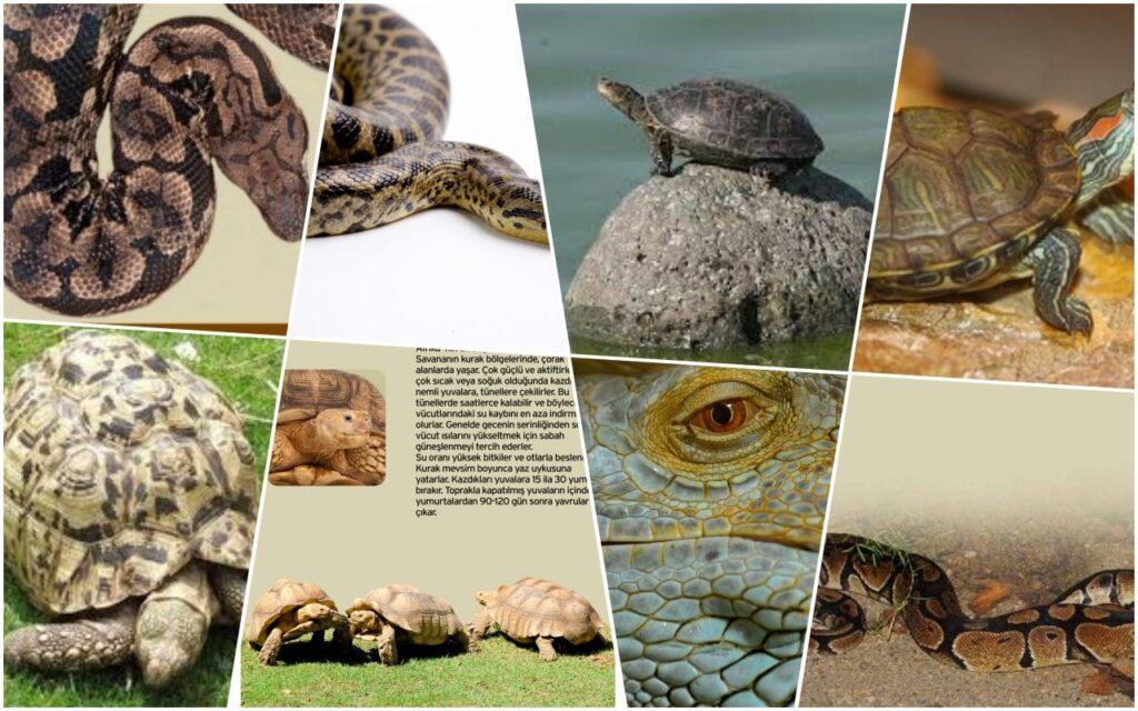Bursa Hayvanat Bahçesi Sürüngen Hayvanları